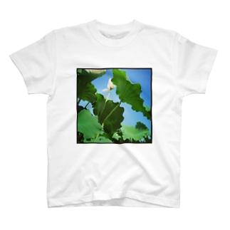 ハスの花 T-shirts