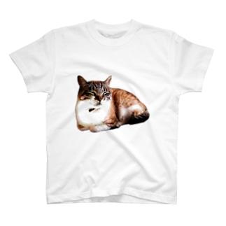 のんたのまんじゅう T-shirts