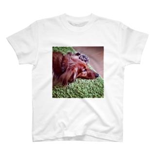 オオサンとフォルテ T-shirts