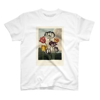フローラの神殿 - チューリップ T-shirts