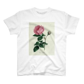 ロサ・センティフォリア T-shirts