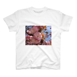 春の彩☆はるのいろ T-shirts