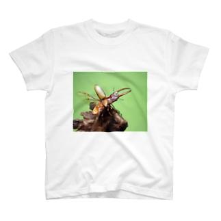 アスタコイデスノコギリクワガタ T-shirts