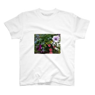 春ですね。 T-shirts