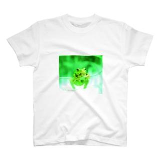 Frog3 T-shirts