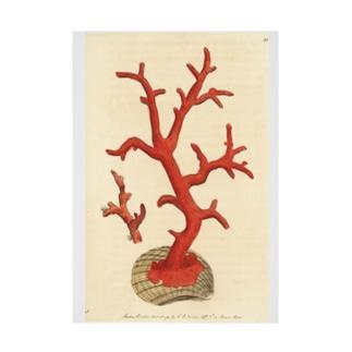 赤サンゴ 吸着ターポリン