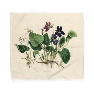 スミレ Towel handkerchiefs