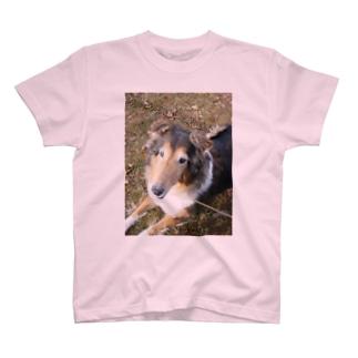 wanko T-shirts