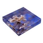 M.F.Photoの桜 Acrylic Blockの平置き