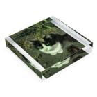 KeePeaceの枯葉をのっけた猫 Acrylic Blockの平置き