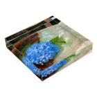 つゆりらぼの水紫陽花 Acrylic Blockの平置き