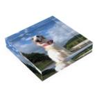 takagimaiの愛犬 Acrylic Blockの平置き