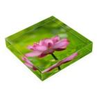 Takashi MUKAIのBlock-Lotus01 Acrylic Blockの平置き