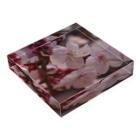 hiroki-naraの梅 ウメ Japanese apricot DATA_P_155 春 spring Acrylic Blockの平置き