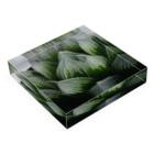 aomatuのハオルチア オブツーサ系3「ブルーレンズ」 Acrylic Blockの平置き