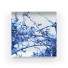 Kengo Kitajimaの桜 Acrylic Block