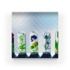✵雨花✵🌕天体観測展7/13〜の植物標本ハーバリウム Acrylic Block