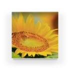 M.F.Photoのひまわりとミツバチ Acrylic Block