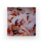 watawahaの金魚 Acrylic Block