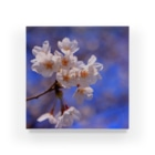 M.F.Photoの桜 Acrylic Block