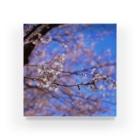 M.F.Photoの桜2 Acrylic Block