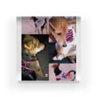 さーちゃん💓の飼い犬のわんちゃん💓 Acrylic Block