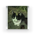 KeePeaceの枯葉をのっけた猫 Acrylic Block