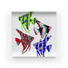 アズペイントの熱帯魚4 Acrylic Block