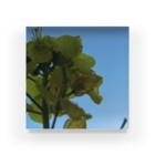 Pudding/アライマリンのしずくの世界 菜の花 Acrylic Block