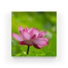 Takashi MUKAIのBlock-Lotus01 Acrylic Block