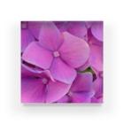 nyonyum☻の紫陽花。 Acrylic Block