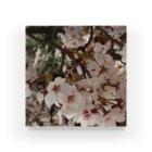 hiroki-naraの桜 サクラ cherry blossom DATA_P_152 春 spring Acrylic Block