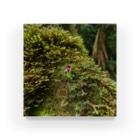 雨林DesignのIN Situ_Corybas sp. Acrylic Block