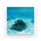 Kyu Furumiのjapan's sea s20 座間味島 サンゴ&群れ Acrylic Block