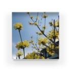 namaste99の黄色い花 Acrylic Block