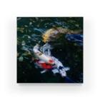 Takashi MUKAIのBlock-Carp01 Acrylic Block
