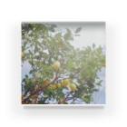 amakawaのあの日のレモン Acrylic Block