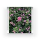 Callion's daydreamのピンクのお花 Acrylic Block