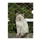 トロワ イラスト&写真館のたまたま出会った野良ネコちゃん Clear File Folder
