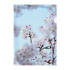 KOUTA TANIGUCHIのsakura2 Clear File Folder