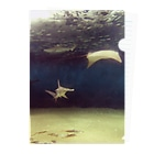FUCHSGOLDの水中写真:シュモクザメとエイ Hammerhead shark & ray Clear File Folder