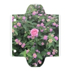 Callion's daydreamのピンクのお花 Clear Multipurpose Case