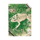 Fantastic FrogのFantastic Frog -Evergreen Version- Notes