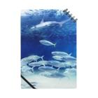 FUCHSGOLDの水中写真:シュモクザメと魚たち Hammerhead shark & fishes Notes