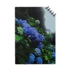 sharonの紫陽花 Notes