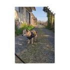 matsunomiの朝の散歩帰りの犬 Notes