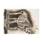 J. Jeffery Print Galleryの銅版画による人体骸骨 Stickable tarpaulinの横向き