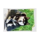 マロマロのKUROSHIBA SMIL! Stickable tarpaulinの横向き