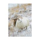 Keina Higashideのアイスランドの羊 Stickable tarpaulin