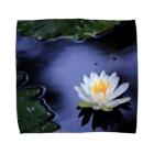 M.F.Photoの睡蓮 Towel handkerchiefs